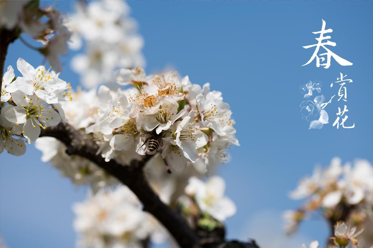 season_spring